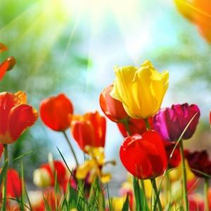 Вас с 8 марта праздником весны
